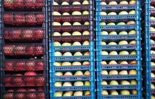 صادرات نخستین محموله میوه و تره بار از بندر دیر به کویت