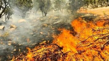 رسیدگی فوری به حیاتوحش آسیب دیده در آتشسوزی زاگرس