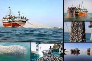 کشتیهای چینی در آبهای ایران حضور ندارند