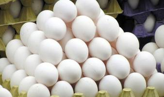 قیمت هر کیلوگرم تخم مرغ درب مرغداری ۹۵۰۰ تومان تعیین شد