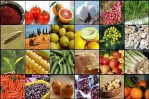 تولید محصولات کشاورزی در سالجاری به ۱۲۸ میلیون تن می رسد