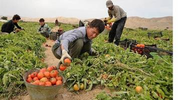 رصد روزانه مرزها برای صادرات محصولات کشاورزی، ضروری است