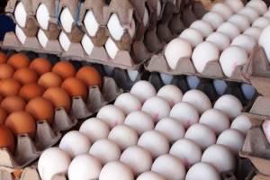 قیمت تخممرغ دوباره رکورد زد