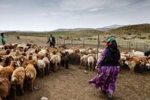 مستمری کشاورزان، روستاییان و عشایر ۲۵ درصد افزایش یافت