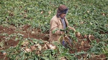 رشد اقتصادی بخش کشاورزی منفی خواهد شد