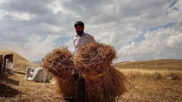 قیمت فروش گندم دولتی بازنگری میشود