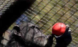 آغاز واکسیناسیون حیوانات باغوحش در برابر کرونا