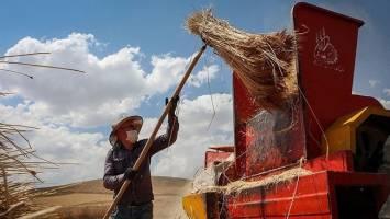 آتش تورم در خرمن محصولات کشاورزی