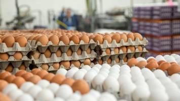 ایجاد تعادل در بازار تخممرغ با واردات ۱۰ هزار تن تا دو هفته آینده