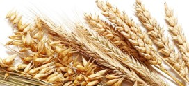 سخنگوی خرید تضمینی گندم بانک کشاورزی اعلام کرد:خرید تضمینی گندم به مرز ۴٫۵ میلیون تن رسید