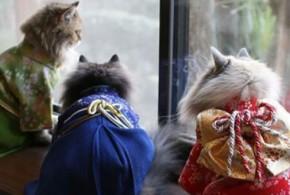 گربه های کیمونوپوش